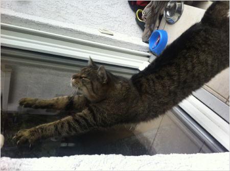 sehen katzen bunt